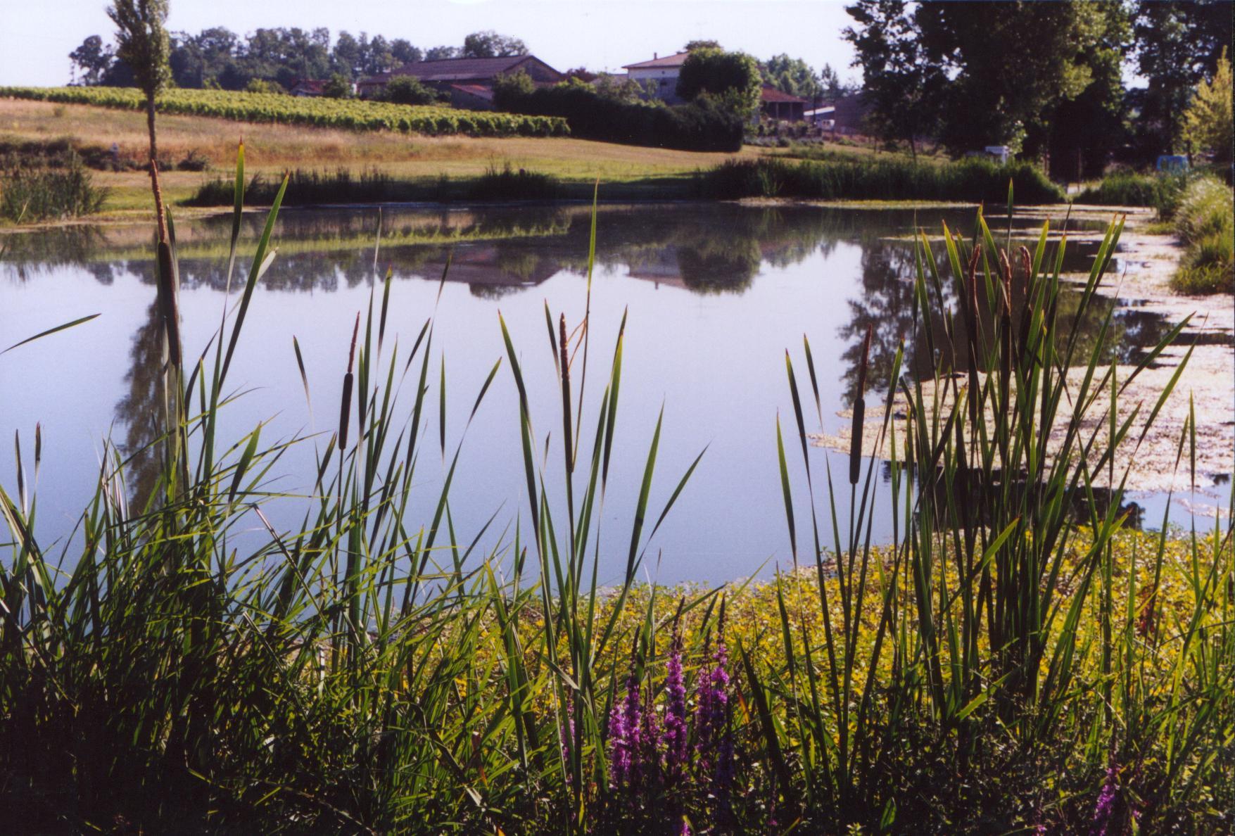 étang-de-vallet, commune de Montendre